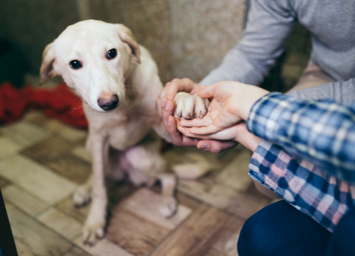 dog adoption and purchases