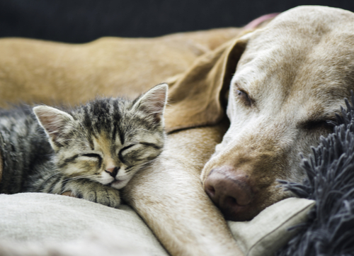 SLEEP WITH THEIR DOGS