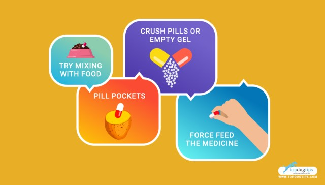 How To Give A Dog Pills or Medication 1