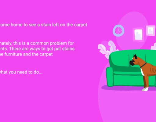 How to Get Pet Stains Out of the Carpet and Furniture