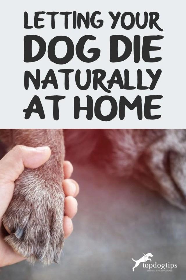 Dog Die Naturally