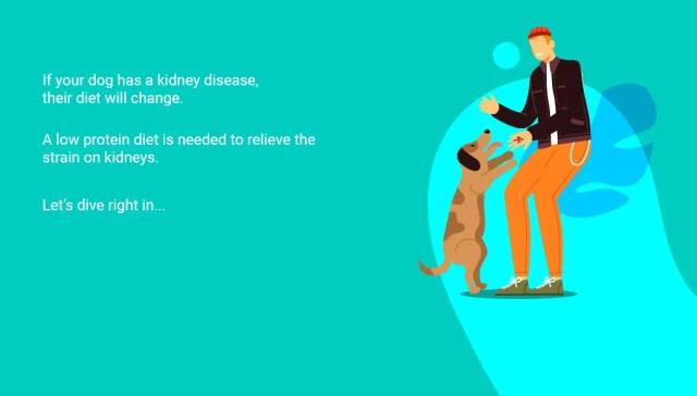 Dog Treats for Kidney Disease