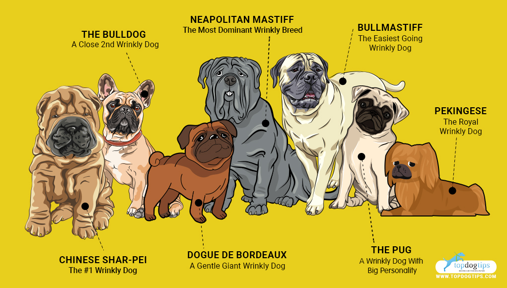 Wrinkly Dog Breeds