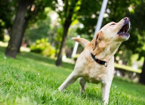 Dog Sounds Barking