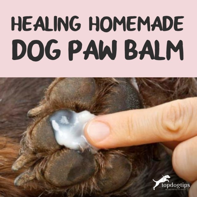 Homemade Dog Paw Balm