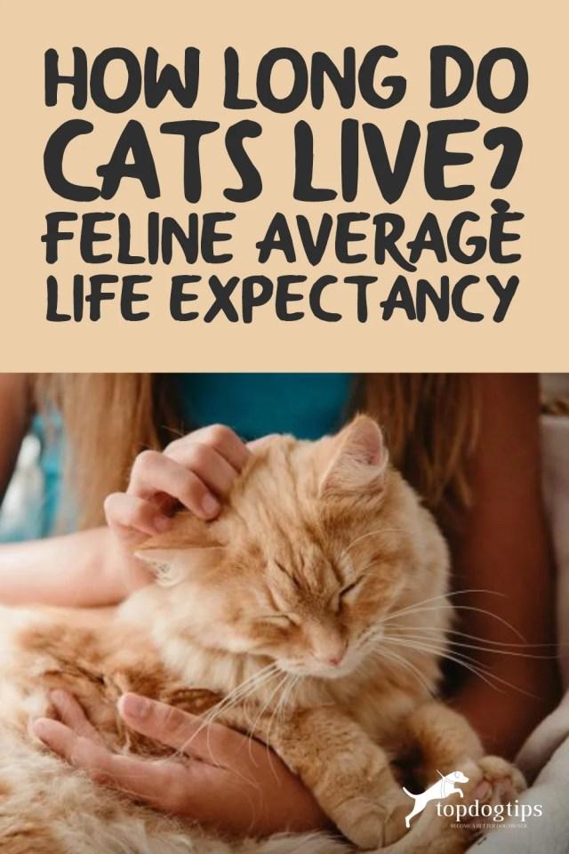 Feline Average Life Expectancy
