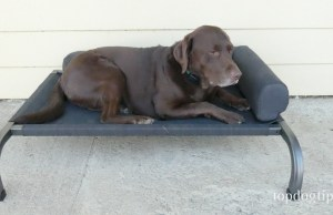 PetFusion Elevated Outdoor Dog Bed