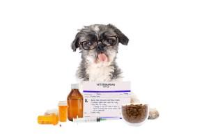 online pet medication sites