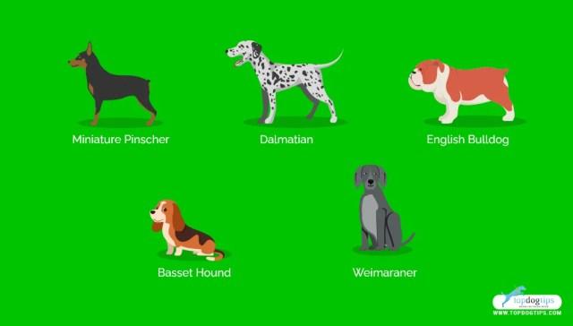 Stubborn Dog Breeds