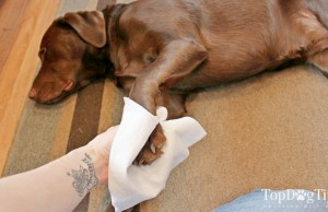 DIY Dog Grooming Wipes