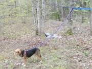DIY dog run