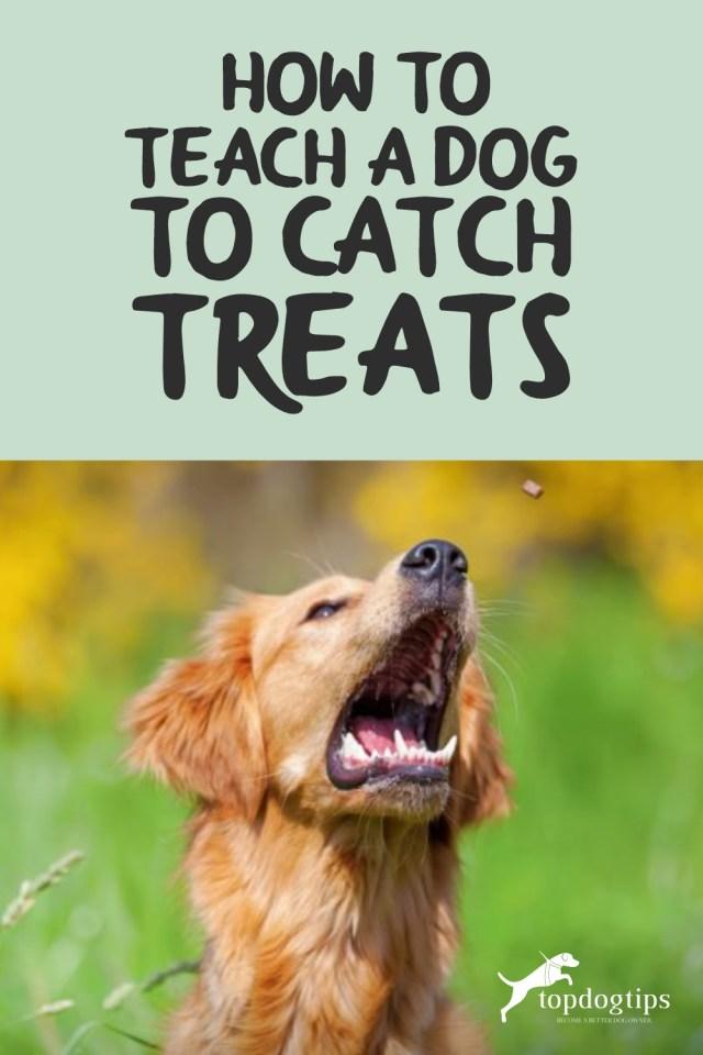 Teach A Dog Tricks