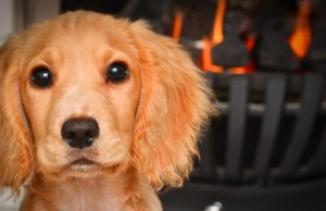 Pet's Fire Safety