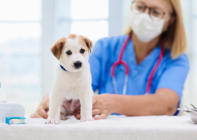 Choosing the right vet