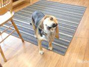fidget spinner for dogs