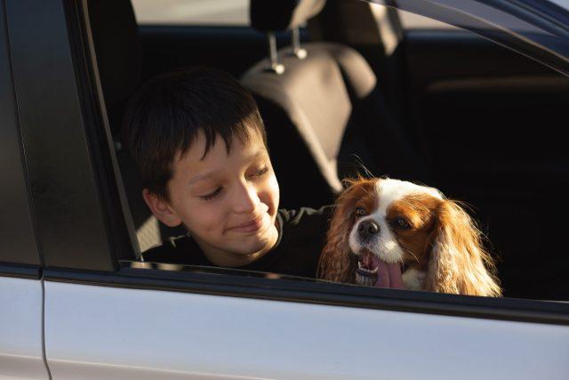 family bringing dog when evacuating