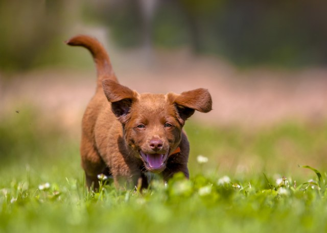 Puppy in a backyard