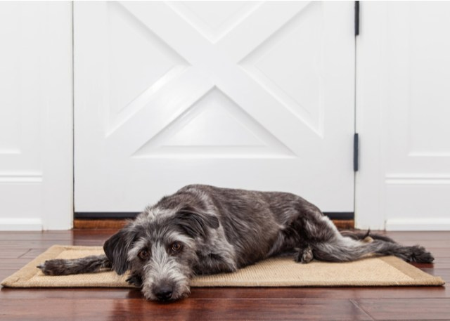 Signs of Dog Joint Health Problems