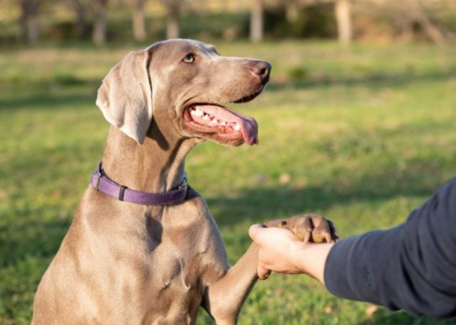 Only let your dog greet someone if they allow to do so.
