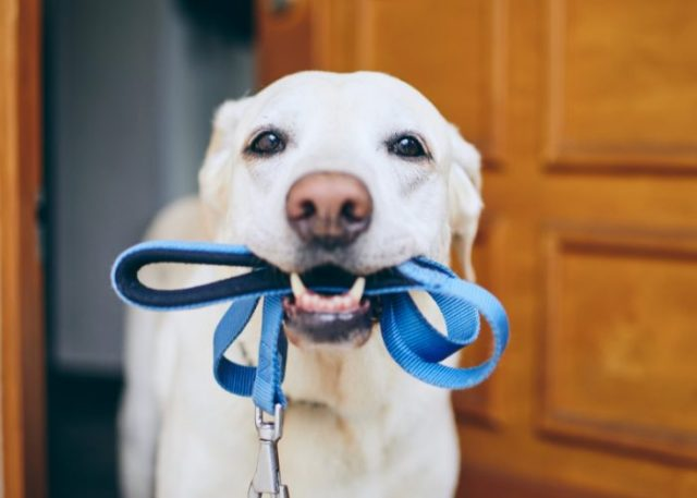 It is an etiquette to always use a leash on your dog while walking.