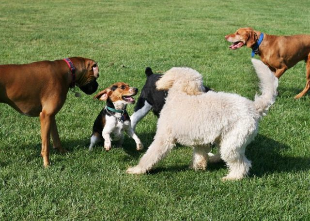Etiquette in Public Places That Every Dog Owner Should Know