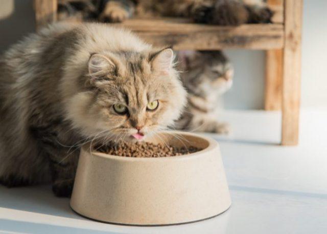 Persian Cat's Diet