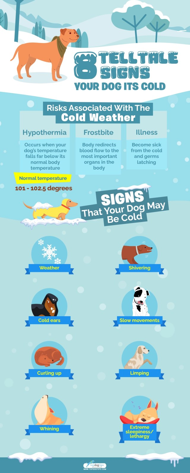 8 Telltale Signs Your Dog Is Cold