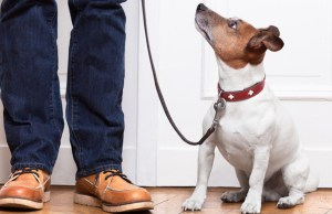 Dog etiquette