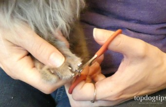 How To Clip Cat Nails