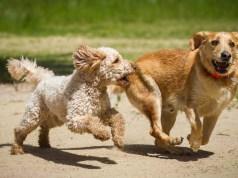 Mixed or Purebred Dog Breeds