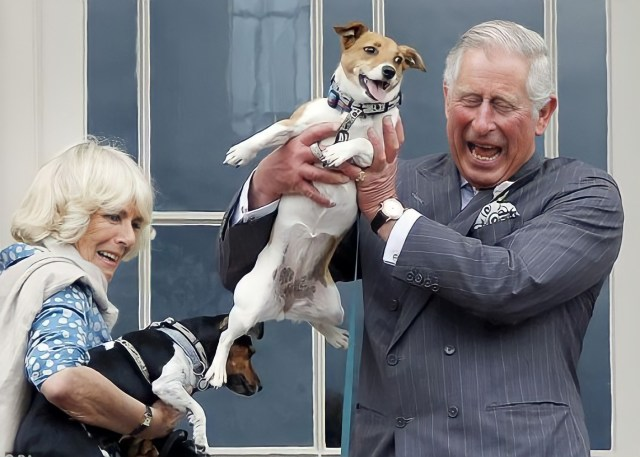 Camilla, Duchess of Cornwall, with Charles, Prince of Wales, and Jack Russel Terrier Dogs, Beth, and Bluebell
