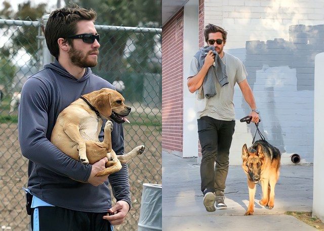 Jake Gyllenhaal and Dogs Boo Radley and Atticus