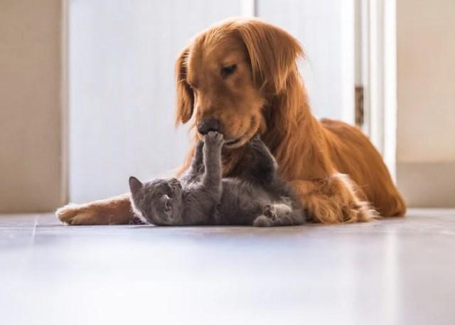 Tip #1: Check Pet Compatibility