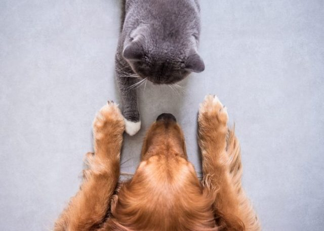 Tip #2: Introduce Your Pet Slowly To Each Other