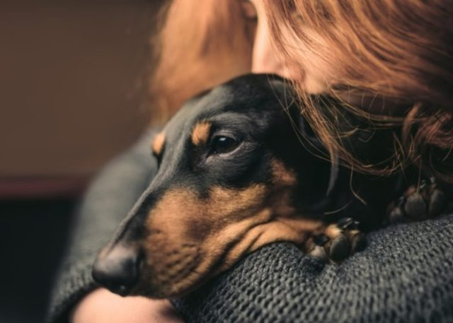 How to Help Your Pet Cope Up with Grief