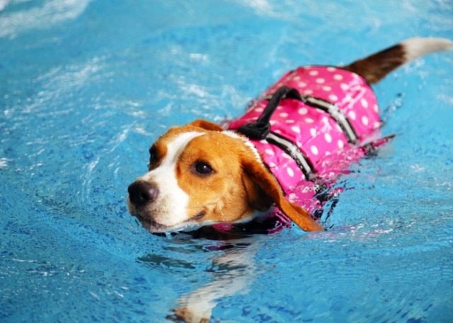 Safety tips in a dog pool