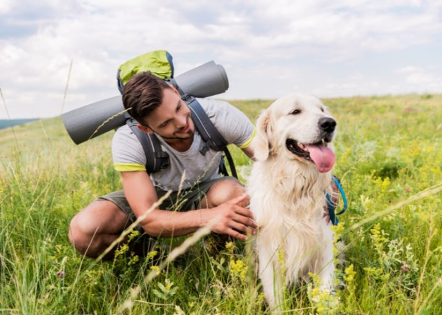 Things to consider before packing up with your dog
