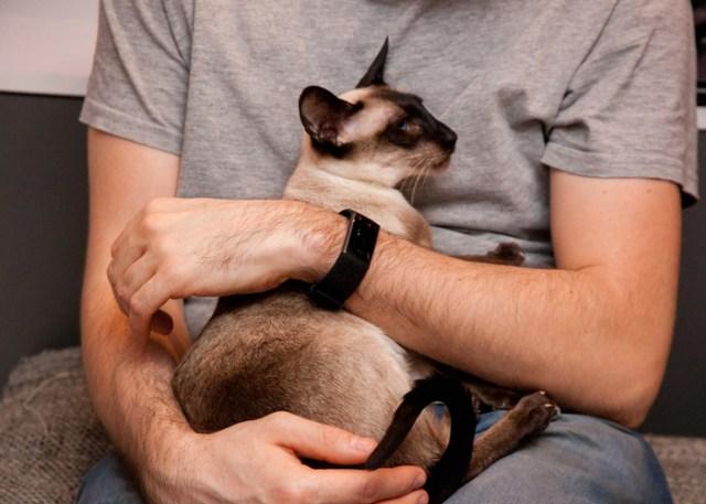 Man hugging a well-behaved cat