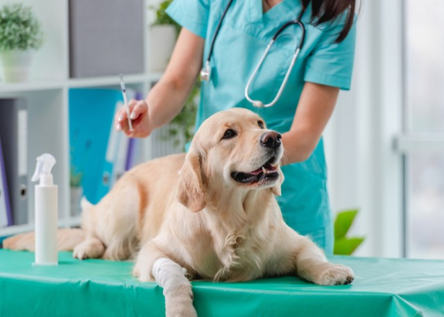 Visiting vet to improve dog's health