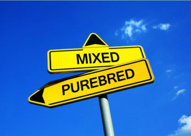 Mixed vs Purebred dog breed
