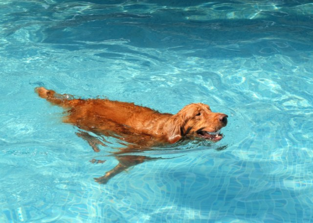 Dog exercising in a dog pool