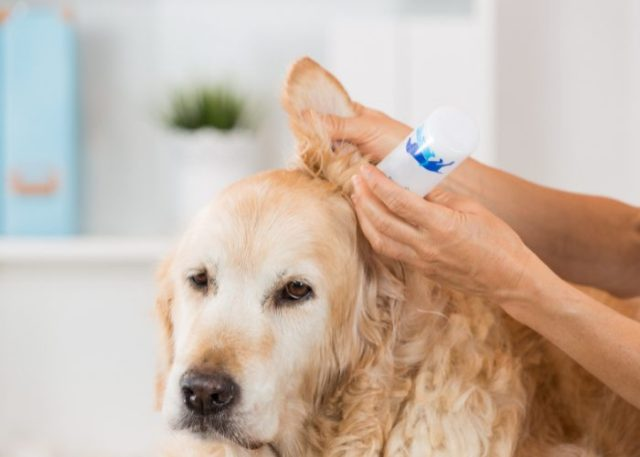 Treatments for Hearing Loss and Total Deafness: Antibiotic Treatment