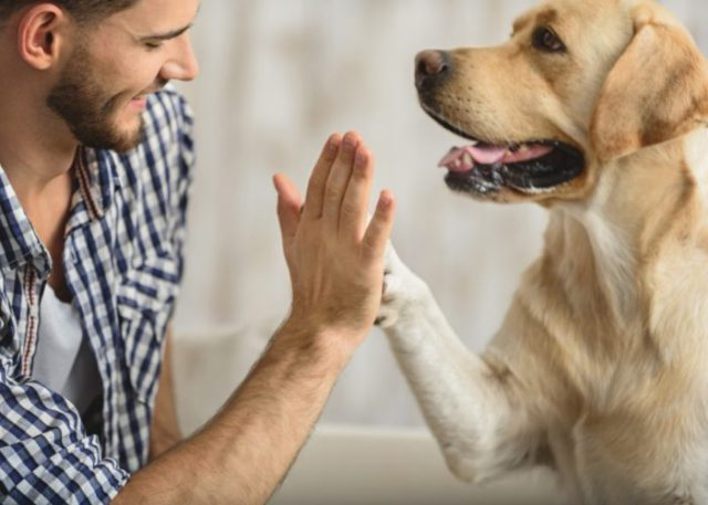 3. Learn Your Dog's Body Language