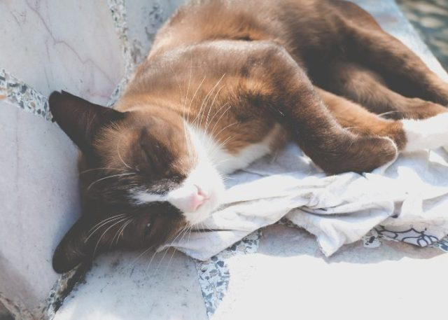 What Happens If My Pet Is Affected From Aflatoxin Poisoning?