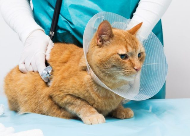 Reasons to Get A Pet Insurance