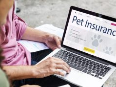 Pet Insurance As An Employee Incentive and Why You Should Get Them?