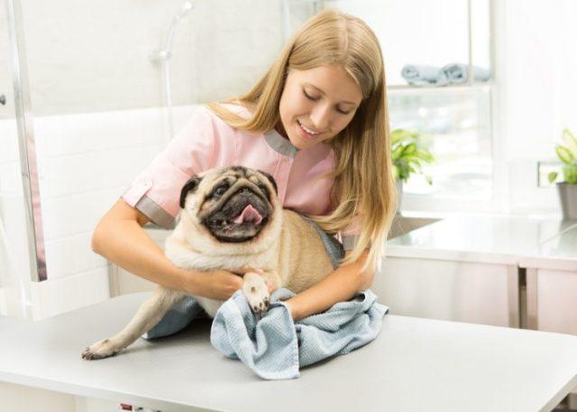 4. Pet insurance allows you to reimburse.