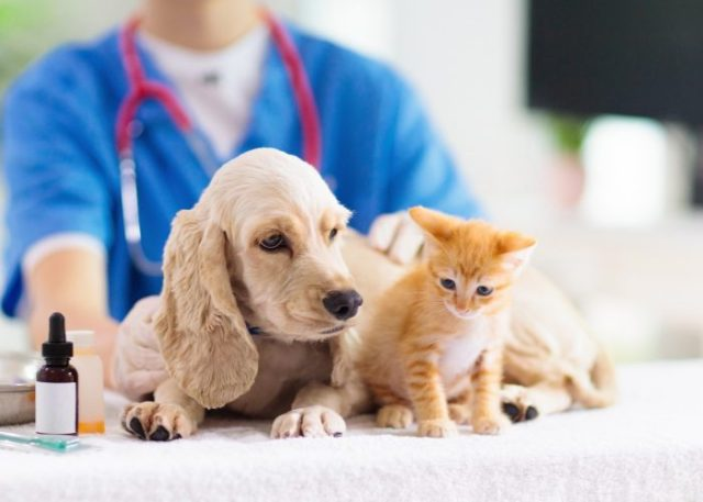 5. Pet Insurance can save them money for the long term