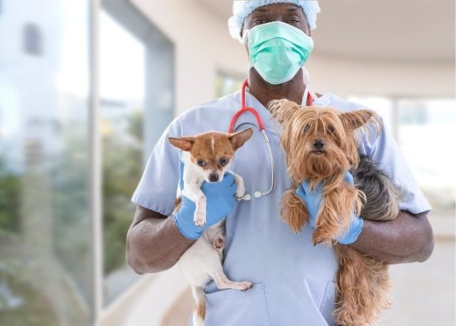 1. Pet insurance may be costly, especially in large and urbanized cities.