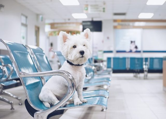 5. Pet insurance may be unable to cover routine healthcare.